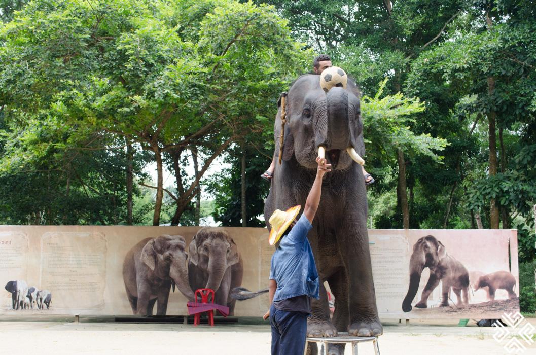 Elephant show Koh Samui-1