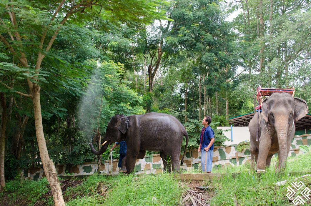 Namuang safari park-5